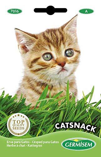 Germisem Catsnack Semi di Erba per Gatti 10 g