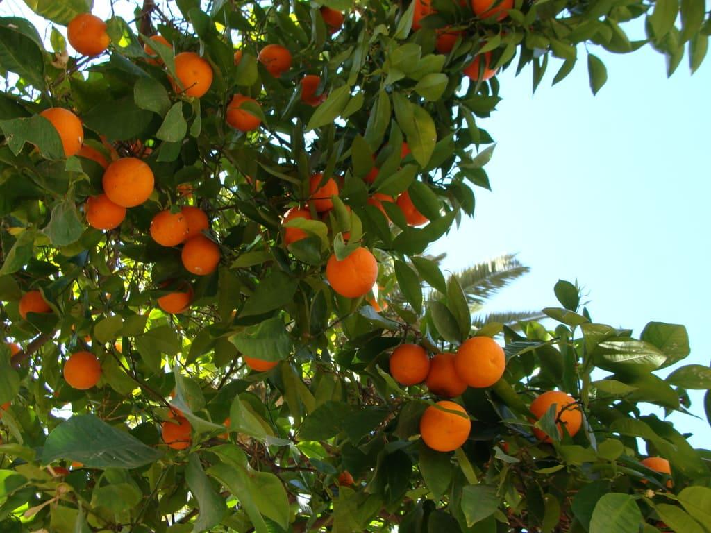 come piantare un albero da frutto!